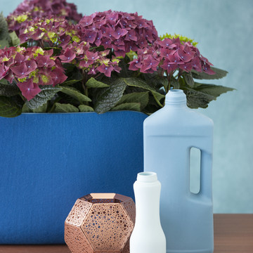 Colourful_Spirit_Hydrangea.jpg