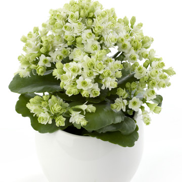 MoreFlowers_Paris_Evergreen_1.jpg