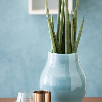 Colourful_Spirit_Sansevieria_cylindrica.jpg