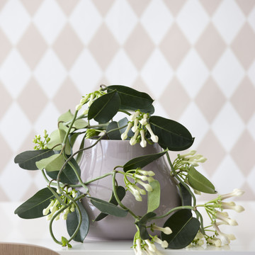 Light_Bloom_Stephanotis.jpg