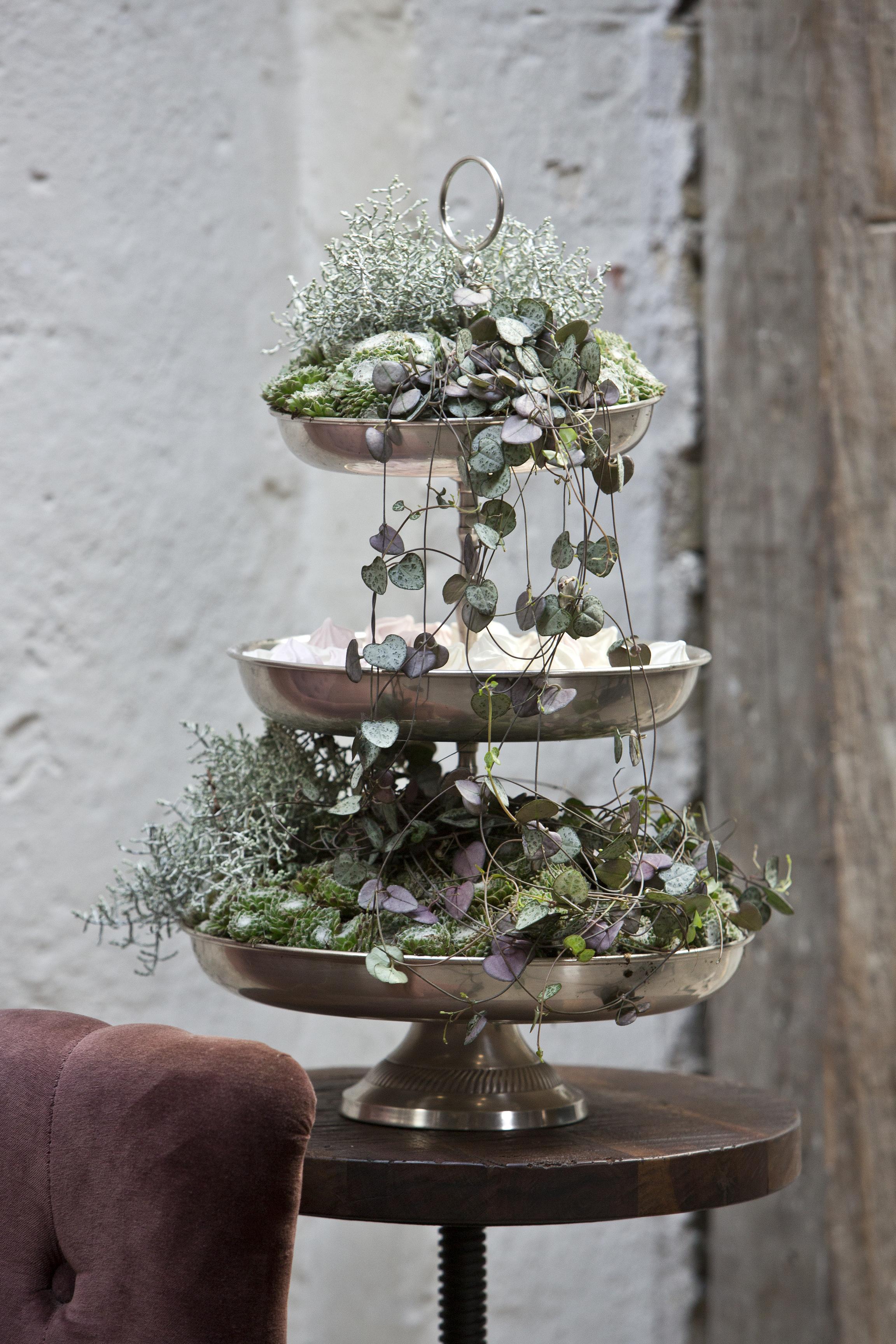 Floradania marketing plants - Etagere weihnachtlich dekorieren ...