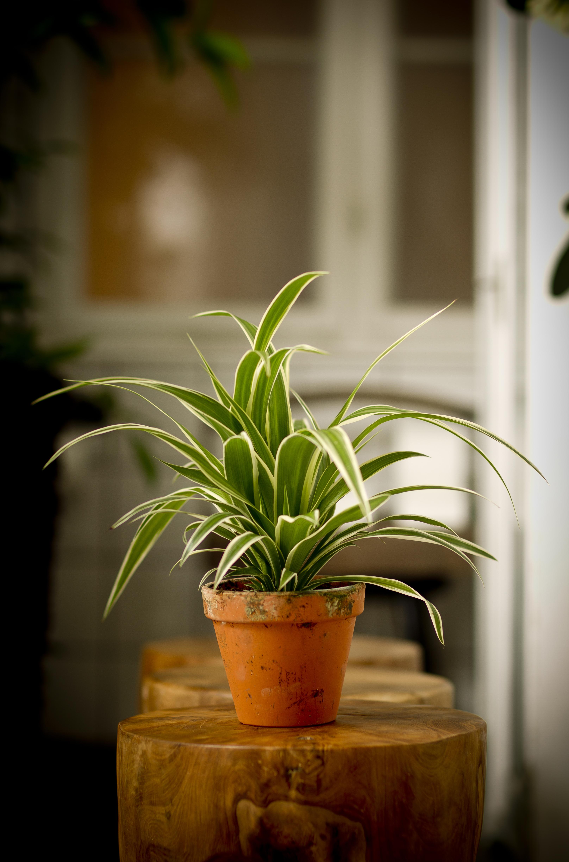 Floradania marketing pflanzen - Zimmerpflanzen gestaltungsideen ...