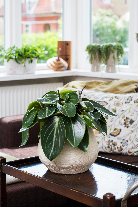 Floradania Marketing Plants
