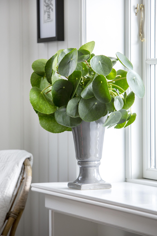Floradania marketing plants for Zimmerpflanzen trend