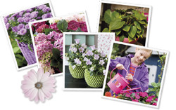 Floradanias image bank
