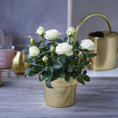 Skip forward to summer with beautiful roses