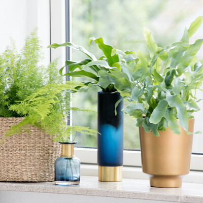 Planter hjælper mod dårligt indeklima