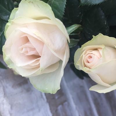 Ivory Love Fragrance Forever®