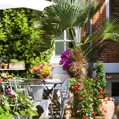 Use plants to create a Mediterranean atmosphere on the terrace