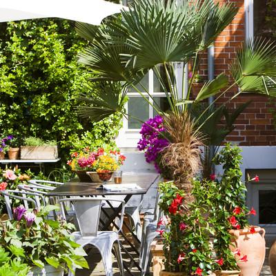 Pflanzen zaubern auf der Terrasse südeuropäische Stimmung