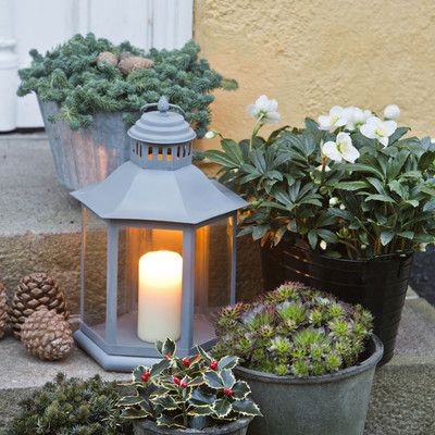 A cosy December with plants