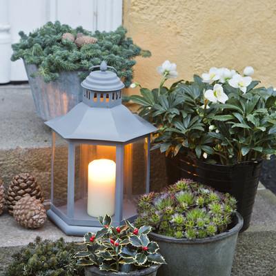 Decemberstämning med krukväxter