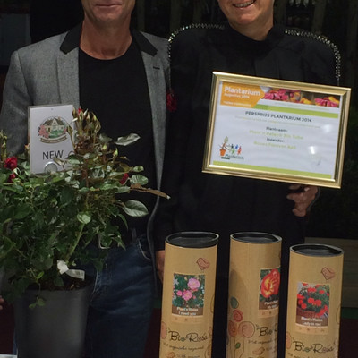 Organic Danish roses win prestigious award in the Netherlands