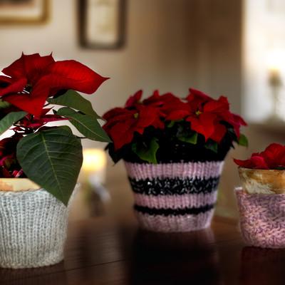 Julens planter på nye måder