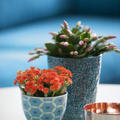 Pflanzentrend im Herbst – Simple Details