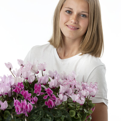 Cyclamen - a classic in new clothing