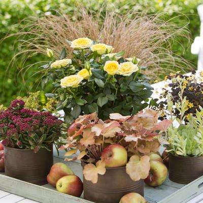 Late summer dreams in the pot garden