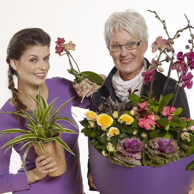 Lysten til planter stiger med alderen
