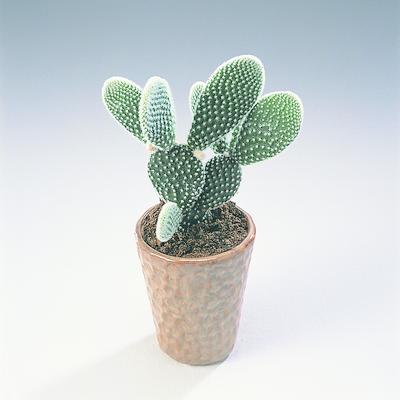 Den perfekte plante til de travle unge