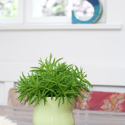 Eksotisk og dekorativ grøn plante i mange udgaver