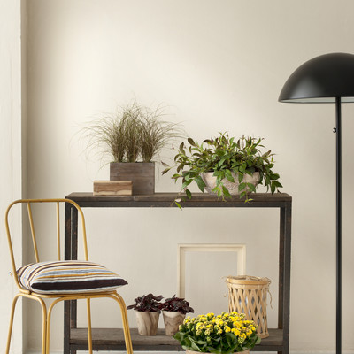 This summer′s plant trend - Lots of greenery and a 70s atmosphere