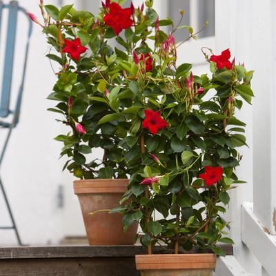 Plants don′t need suntan lotion