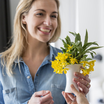 Orkidéer til hverdag og fest