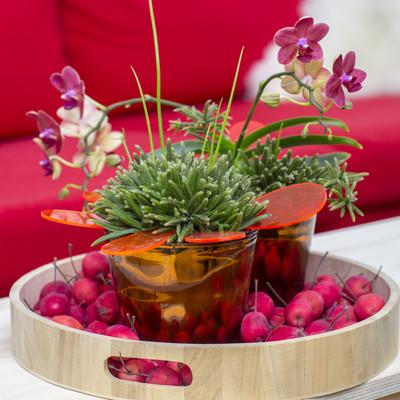 Pflanzentrend des Winters: Flora Chances