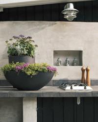 Trachelium – en elegant og hårdfør plante til krukker