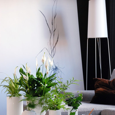 Clean air at home with green plants