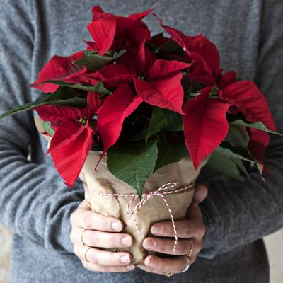 Julstämning med växter