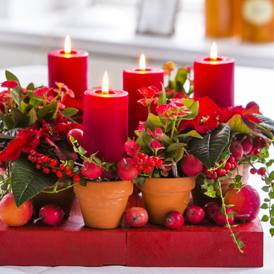 New plant ideas for Advent
