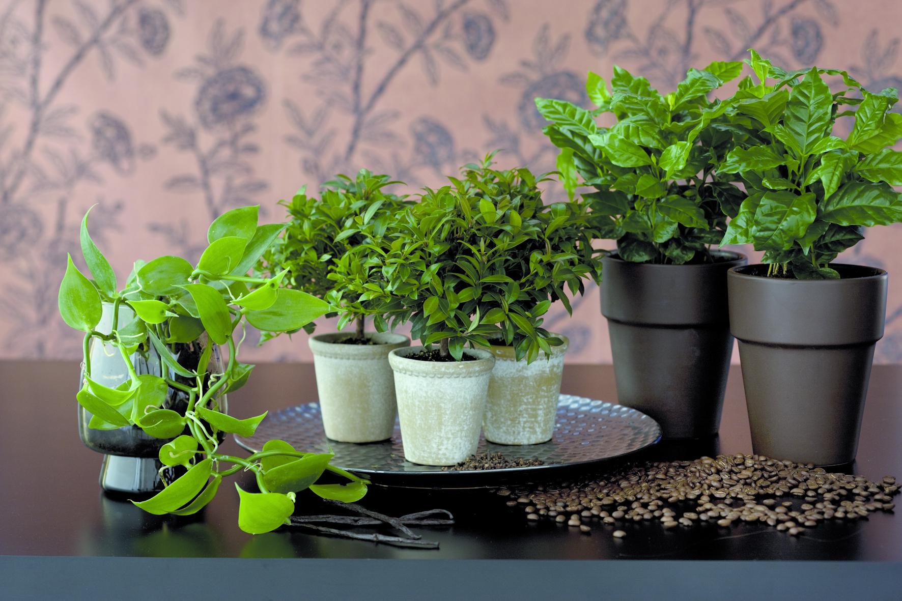 Floradania.dk: Weihnachtsgewürze: Dekorative Pflanzen im Wohnzimmer