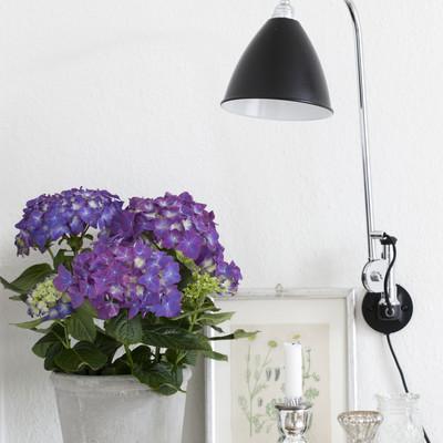 Stylish hortensia