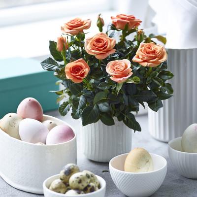 Romantisk påske med roser