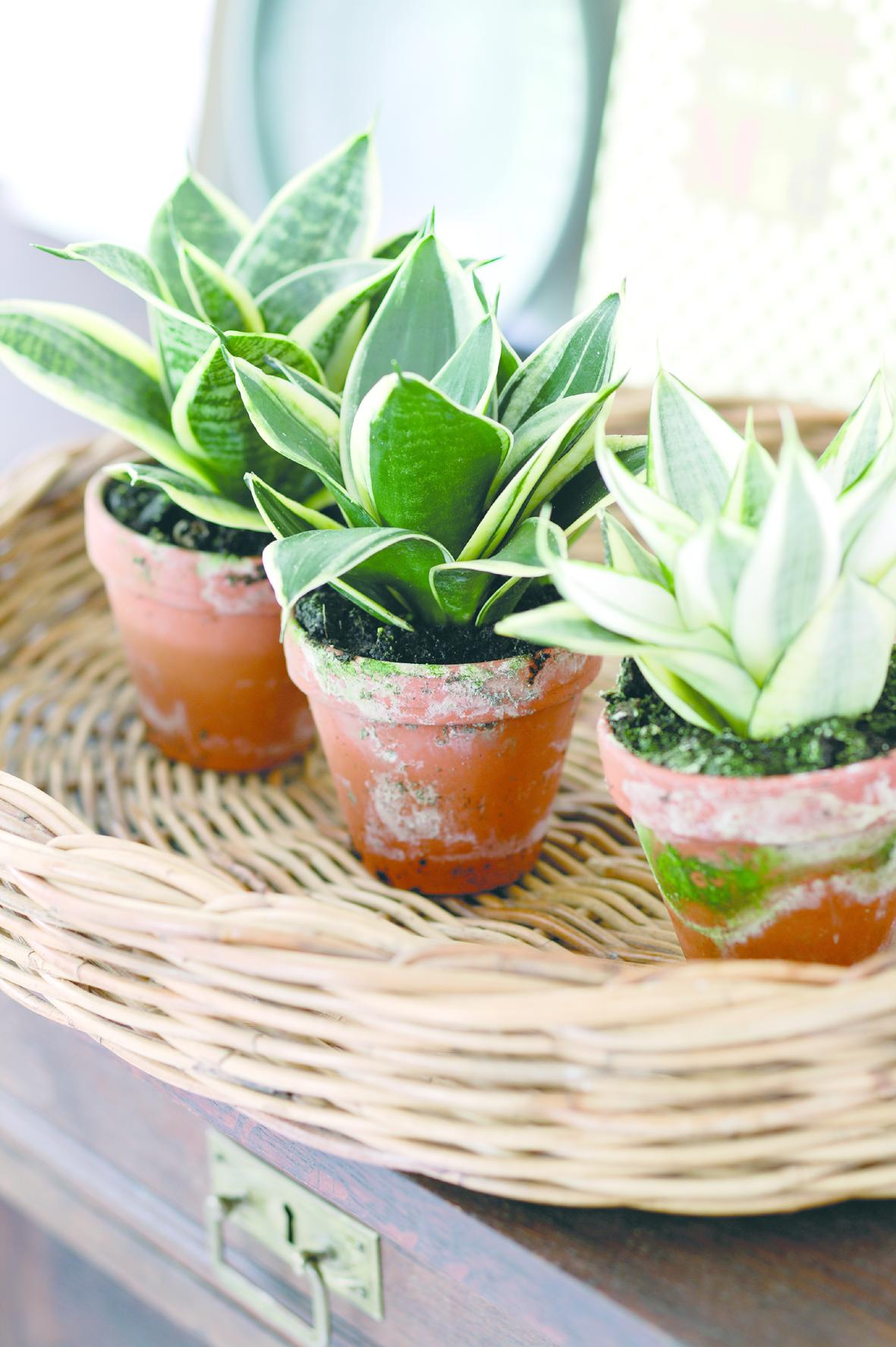 Floradaniadk Pflegeleichte Pflanzen Für Die Wohnung
