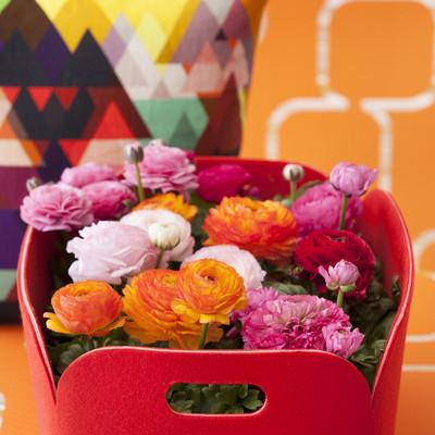 Vårens växttrend – Colourful Spirit
