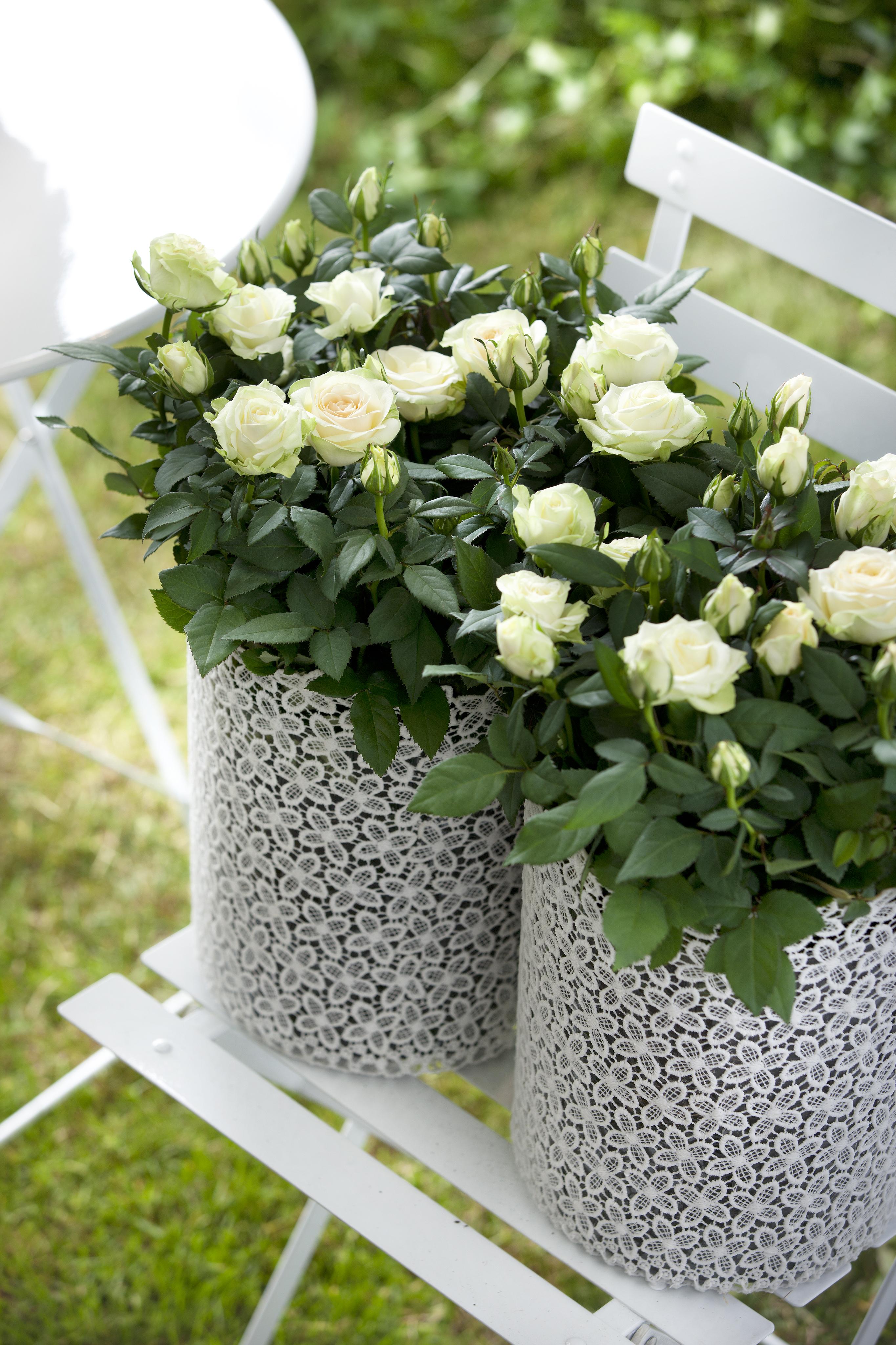 floradania marketing wunderbare rosen drinnen und drau en. Black Bedroom Furniture Sets. Home Design Ideas