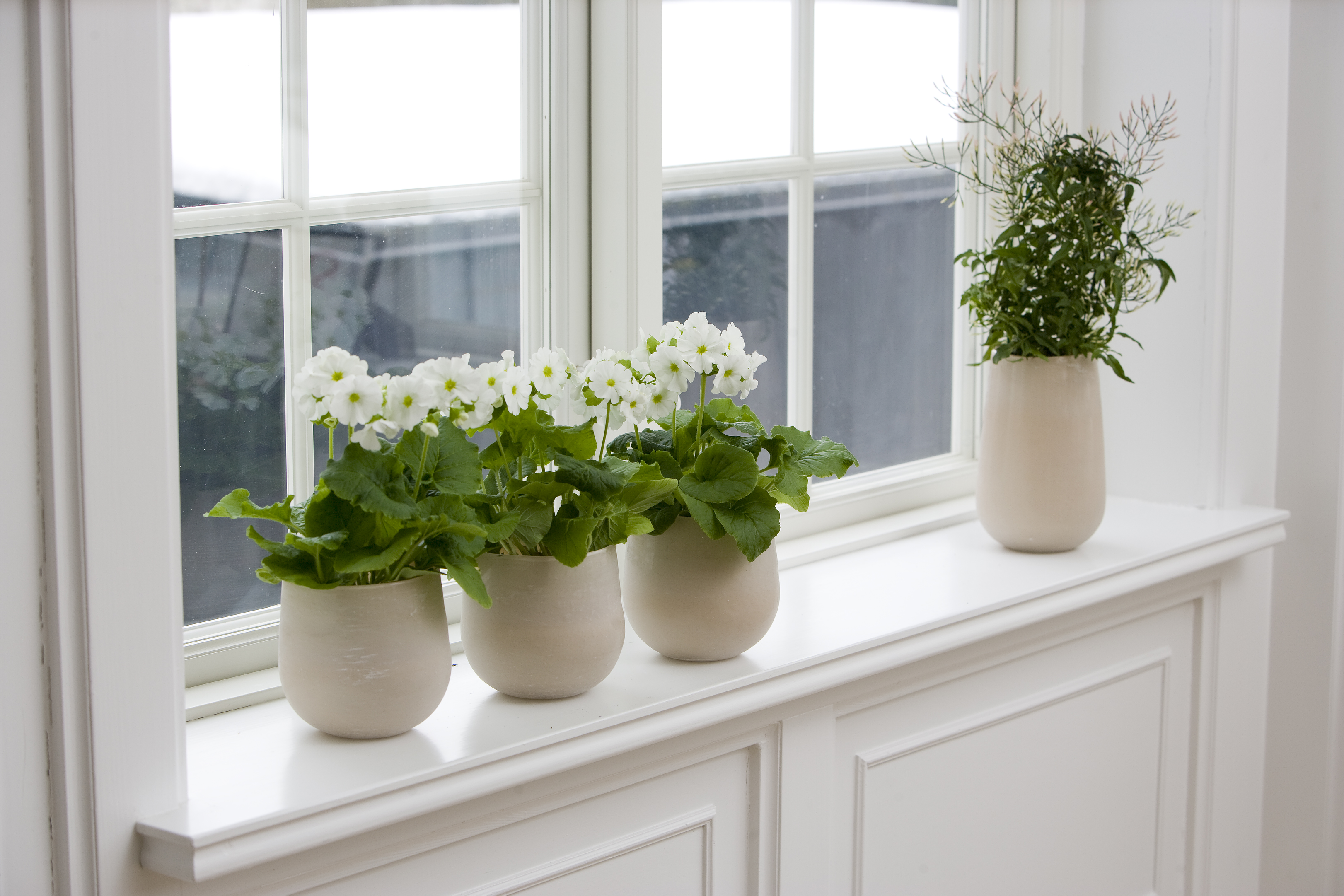 Floradania marketing what does your window sill signal - Houseplants thrive low light youre window sill ...