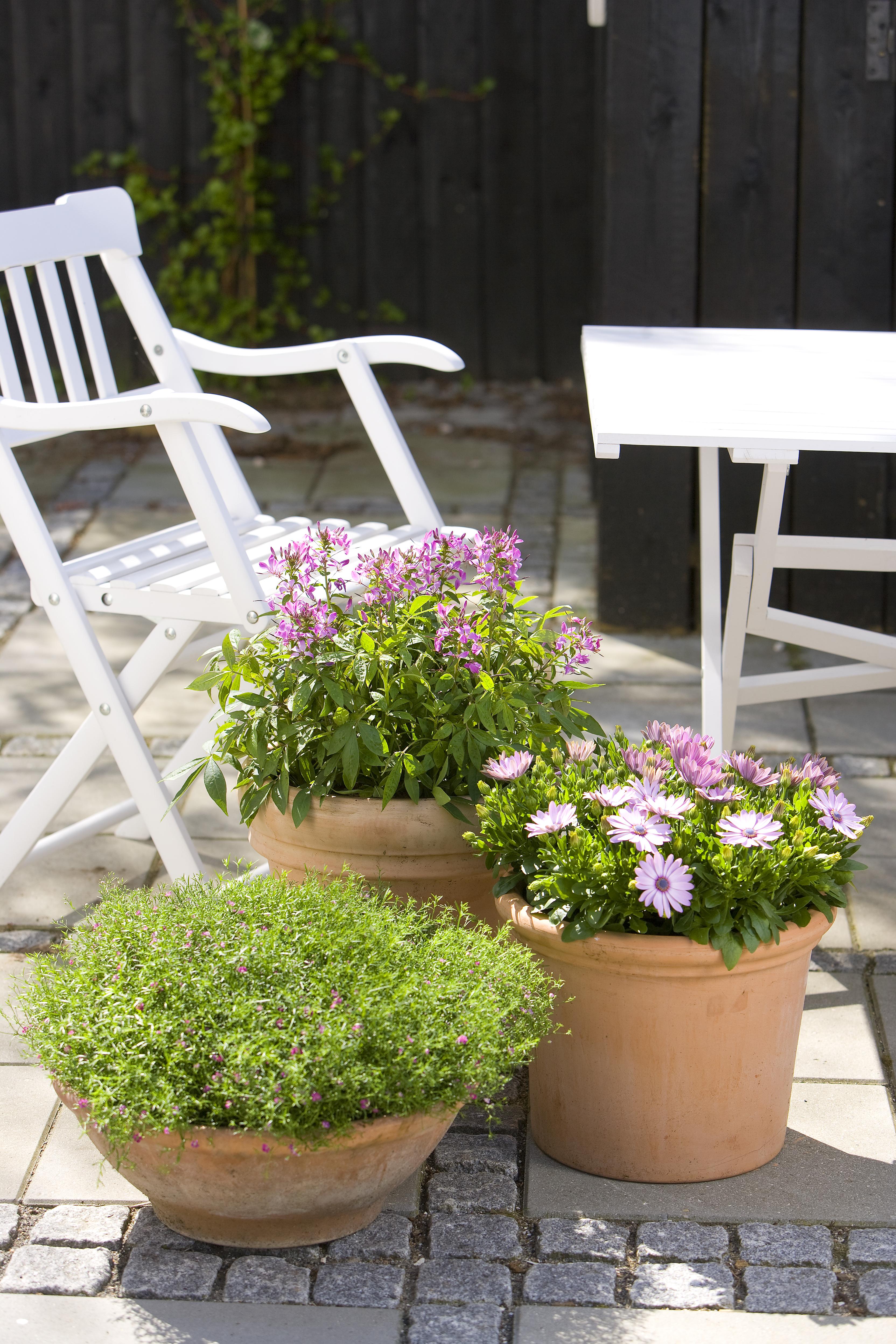 Floradania marketing plant krukker i farvegrupper p for Planter til koidam