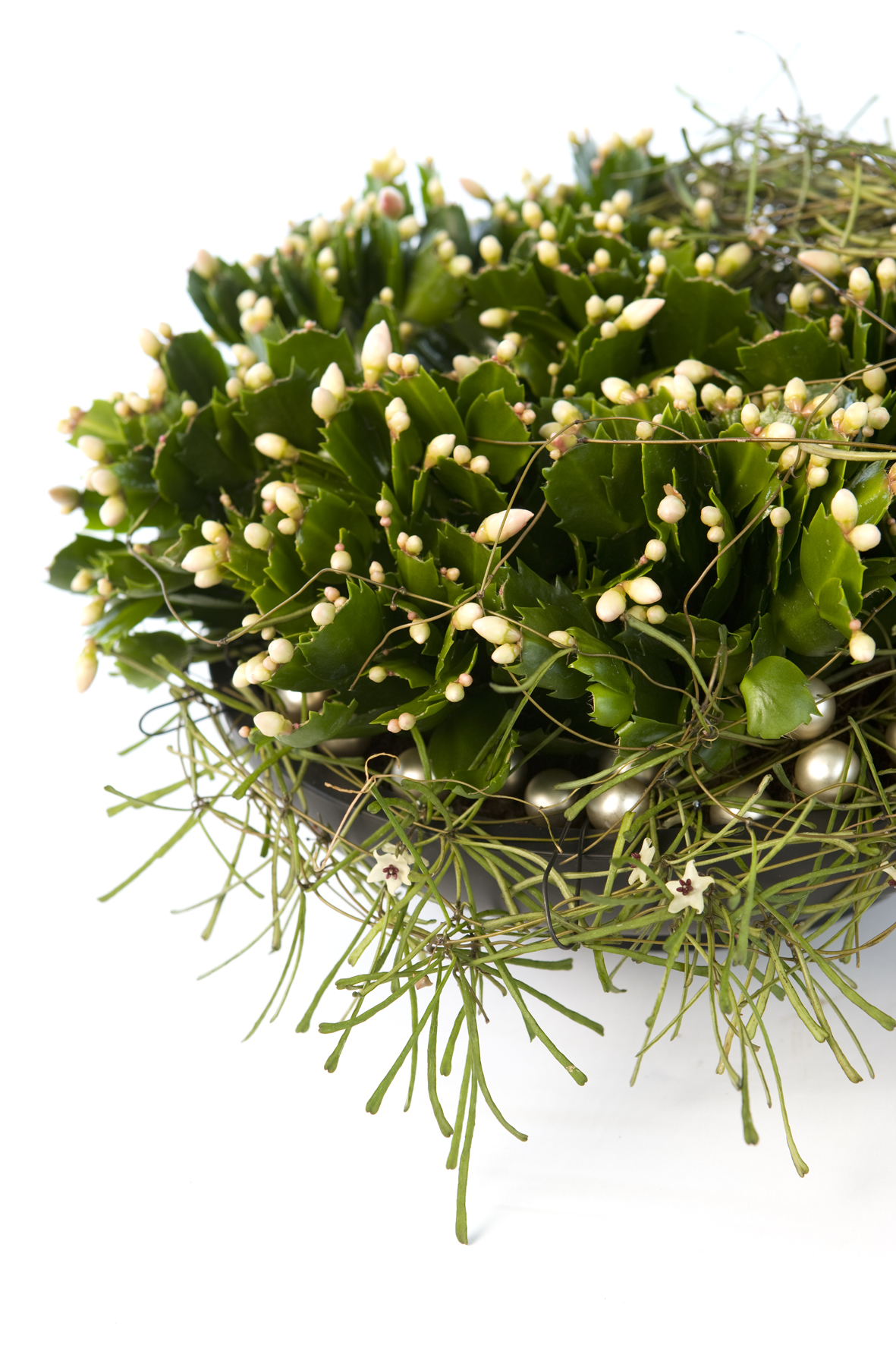 Floradania Marketing: Plant article
