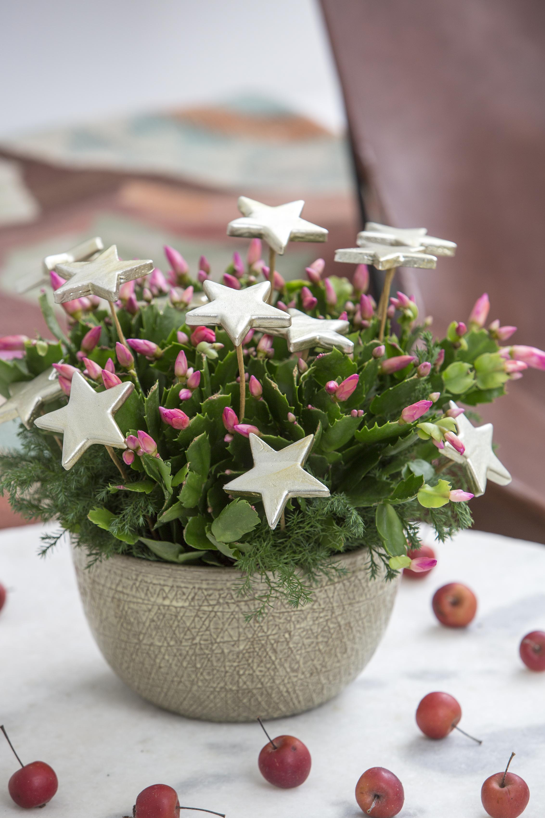 Floradania marketing: julstämning med växter