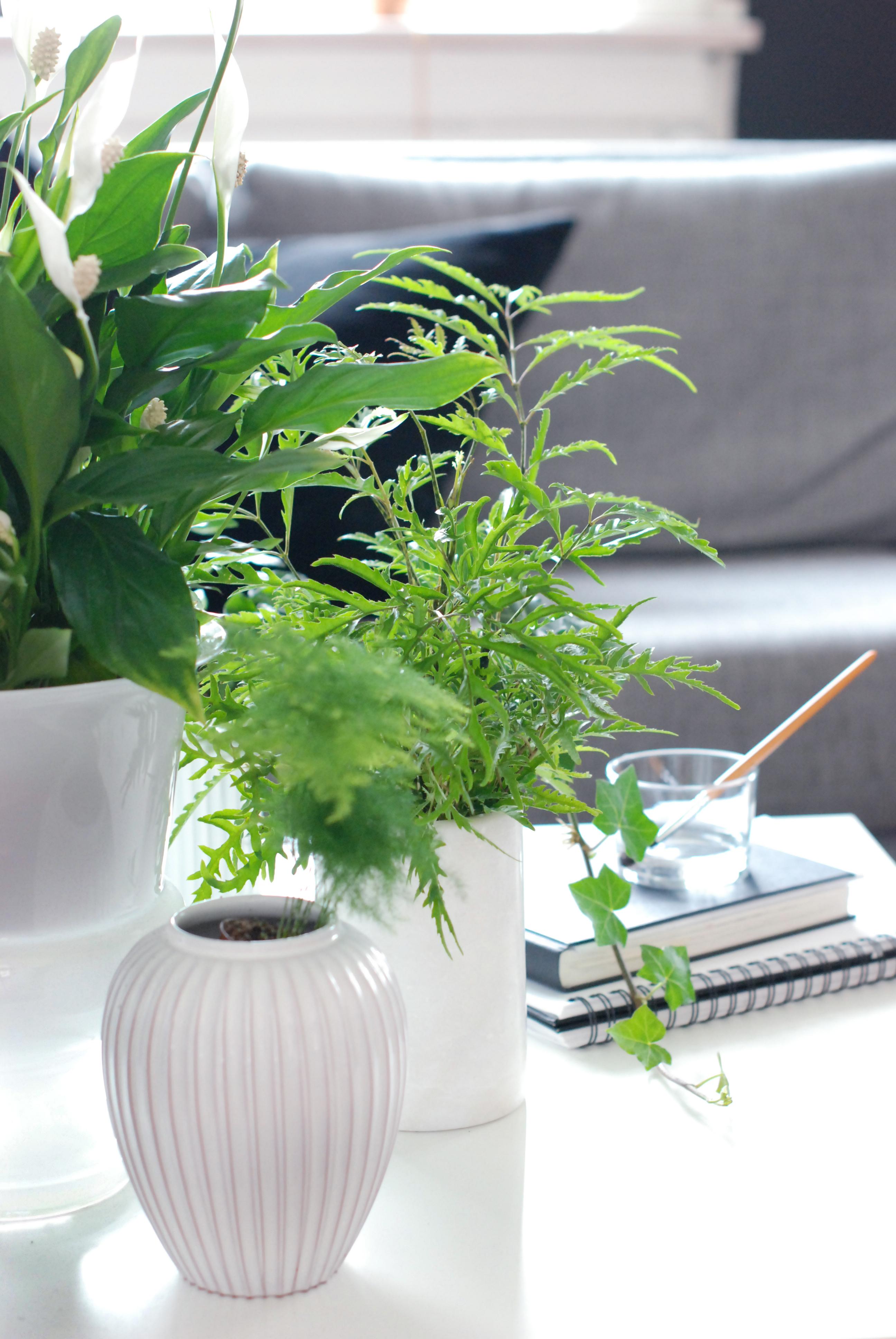 grønne planter indendørs